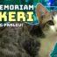 Kucingku Fikeri: Pejuang Virus Panleukopenia!