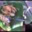 Wisata Kuliner Nganjuk: Nasi Pecel Bledek!