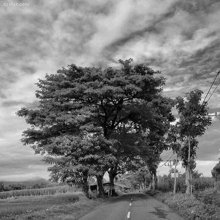 Pohon di sekitar Kuncir