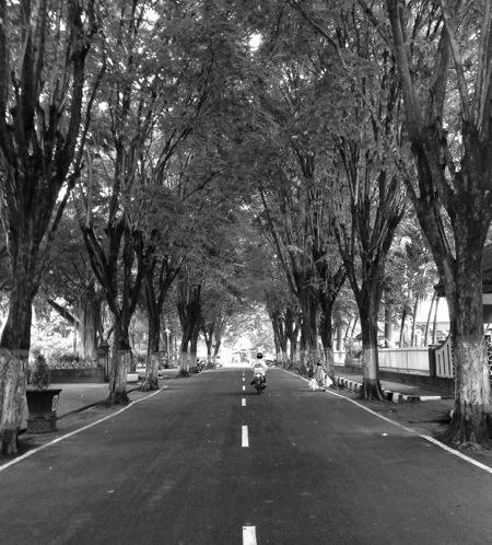 pepohonan depan SMP 1 Nganjuk
