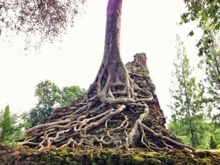 Akar Pohon Candi Lor