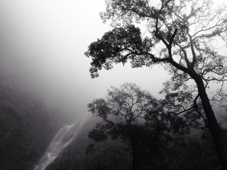 Pepohonan dan Sedudo