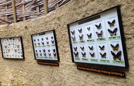 Kupu-kupu di Eco Green Park