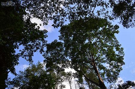 Langit Roro Kuning dihiasi pepohonan rindang
