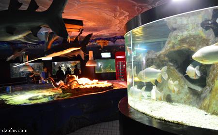 Fish Park Jatim Park 1