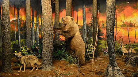 Beruang di Museum Satwa Batu Malang