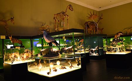 Dinosaurus di Museum Satwa