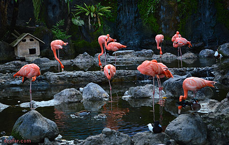 Flamingo Batu Secret Zoo