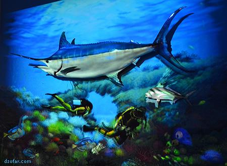 Ikan Cucut 3D