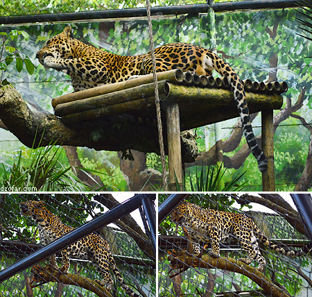 Macan Tutul Batu Secret Zoo