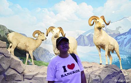 Rian dan Domba