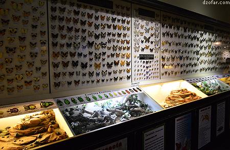 Serangga di Insectarium