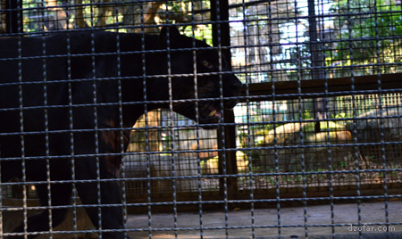 Jaguar di Batu Secret Zoo
