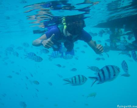 Snorkeling Mas bebek