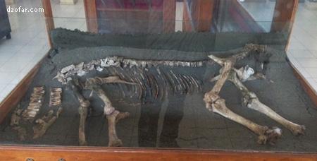 Fosil Bovidae