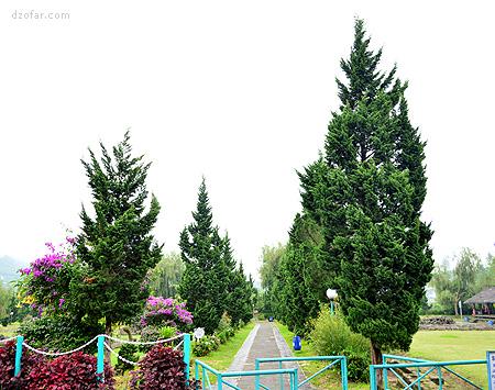 Taman di sekitar Pendopo