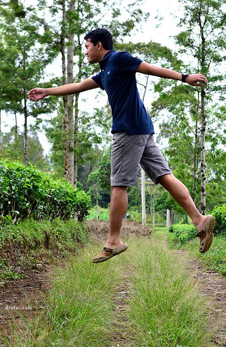 Levitasi di kebun teh Tambi