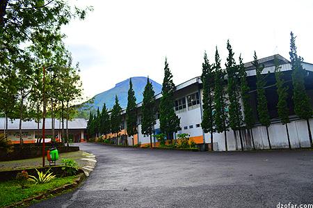 Pabrik teh Tambi