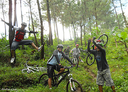 Hutan Pinus Bajulan