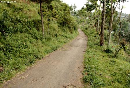 Lebar jalan singokromo