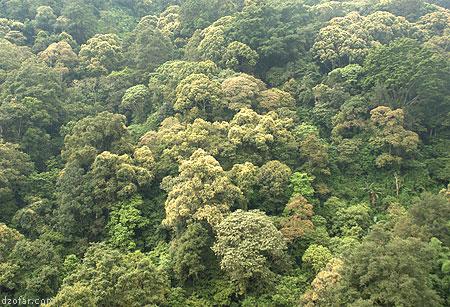 Pepohonan gunung