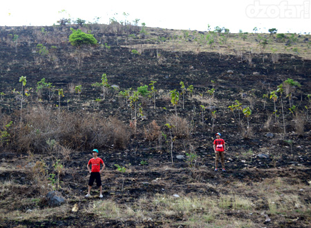 Hamparan rumput kering habis dibakar