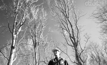 Ndop di pepohonan kering