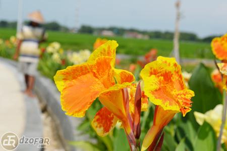 Bunga bunga di taman