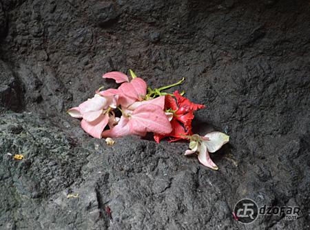 Bunga di Goa