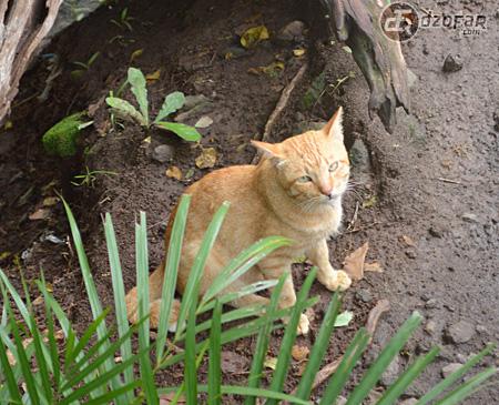 Kucing Selomangleng