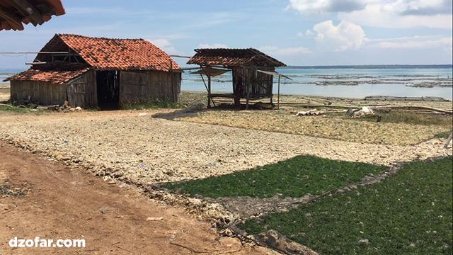 rumput laut saronggi sumenep