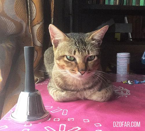 kucing penyedot energi negative